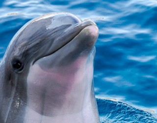 Dolphin Discovery Grand Cayman Header