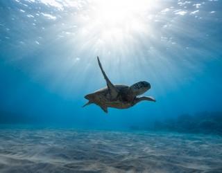 Swim with the Turtles (Spotts Beach) Header